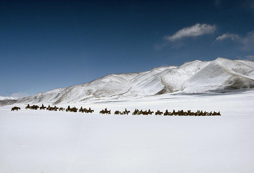 Une communaute migre vers une vallee plus verdoyante de la plaine de Tso Kar, Ladakh, Inde. / A community migrates to a lusher valley in the Tso Kar plateau, Ladakh, India.