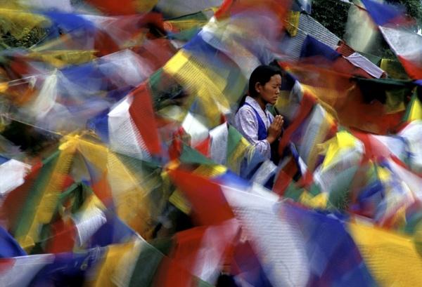 Bodh Gaya - Nyima Lhamo, une jeune Tibetaine refugiee, en priere lors du pelerinage a Bodh Gaya, Inde