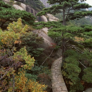 The Huang Shan mountains, a place of inspiration for traditional Chinese painting and literature, China.