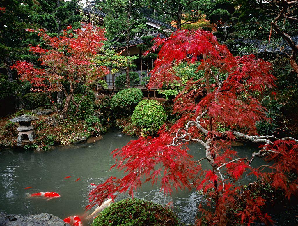 A K ya-san, plus de cent temples bouddhistes aux jardins méditatifs très élabores offrent enseignement et hospitalite aux pèlerins (Japon)